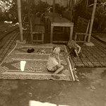 Photo of Jungala House