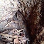 Sunland Baobab Foto
