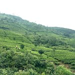 Foto de Ceylon Tea Trails