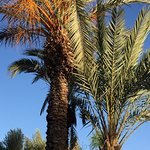 Photo de Villa Jardin Nomade