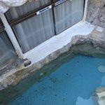 Murky pool, rusty fridge, fatty meat, dirty pool, dirty table legs.