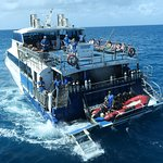"The taxi to the Reef Encounter, ""Reef Experience"""