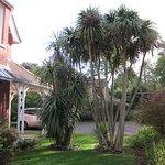 Chart House Palm trees & car park