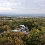 Ausblick vom Turm über den Wald
