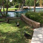 Many ducks resident around the lake