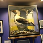 Spot the albatross