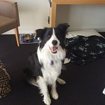 Our border collie Digger loved staying at the Scenic Hotel Te Pania