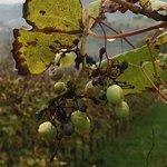 Photo of Alice Relais nelle Vigne