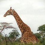 Kwa Madwala Private Game Reserve Foto