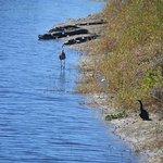 Myakka River State Park Foto