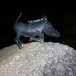 Warthogs Bush Camp Foto