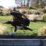 Foto di Hawk Conservancy Trust