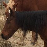 Photo de Wild Horse Adventure Tours