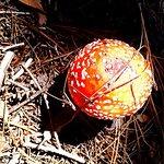 Mushroom on Box Spring Trail.