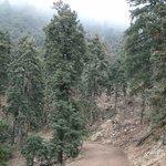Tehachapi Mountain Trail - an easy and beautiful hike.