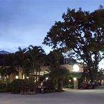 Palm Garden Foto