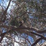 Kangaroo Island Hire a Guide Foto