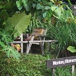 Monkey Biziness, Klong Nin Beach, Koh Lanta