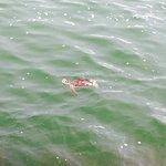 Port Aransas Beach Foto