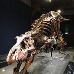 National Museum of Natural History (Naturalis) Foto