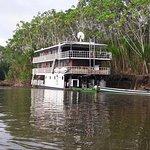 Manatee Amazon Explorer Foto