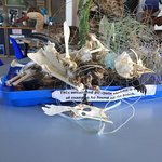תמונה מSouthern African Foundation for the Conservation of Coastal Birds