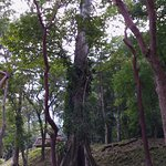 un árbol de mas de 2000 años