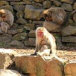 The monkeys at the City Park, Launceston.
