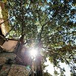 Magestic Banyan Tree
