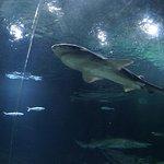 Photo de Kelly Tarlton's Sea Life Aquarium