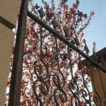 Photo of B&B Monteverdi Garden