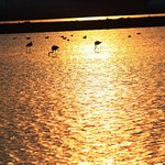 Parco della Salina di Cervia Foto