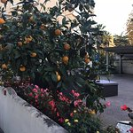 Oranges and limes