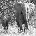 Foto de Simbambili Game Lodge
