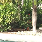 Photo de The Westin Golf Resort & Spa, Playa Conchal