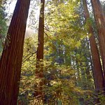 Beautiful sun shinning through the Redwoods.