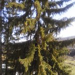 Photo de Dolina Narzanov Resort