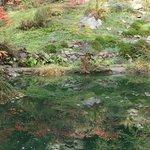 Ohme Garden reflection