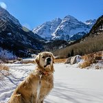 The pup made it up the 6.4 mile hike in to Maroon Lake with us.