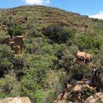 Foto de Mountain Sanctuary Park