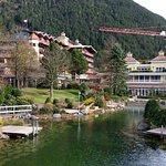 Alpenrose Foto