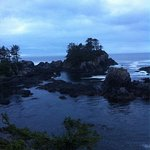 Wild Pacific Trail Foto