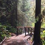 Redwood National Park Foto