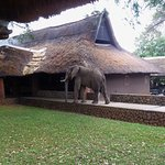 Mfuwe Lodge - The Bushcamp Company Foto