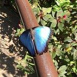 Butterfly Rainforest Photo