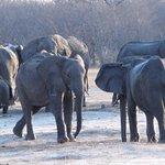 elefanti che giocano