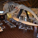 Suzi, the whale. Largest skeleton in a private collection.