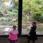 Dublin Zoo Foto