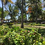Palm Trees - gardens