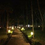 Gardens in evening